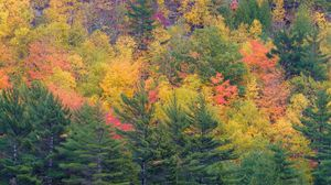 Preview wallpaper forest, trees, slope, autumn, colorful