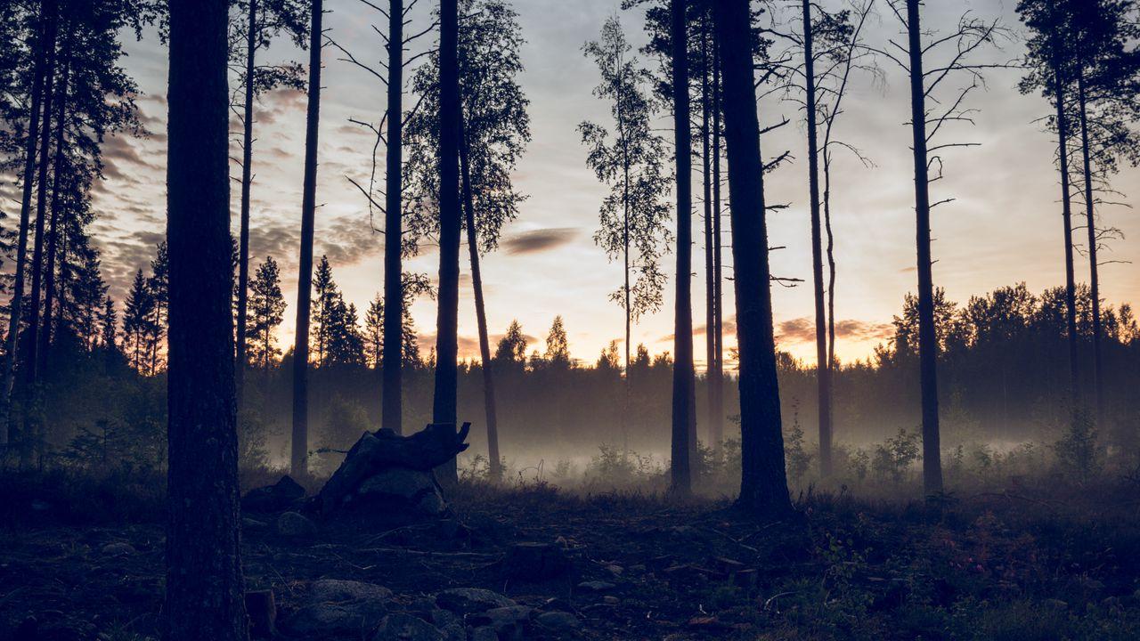 【壁纸桌面】森林,树木,云杉,雾,日落高清壁纸免费下载