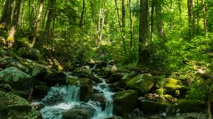 Preview wallpaper forest, trees, stream, stones, nature, landscape, green