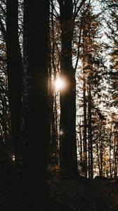 Preview wallpaper forest, trees, sun, flare, dark