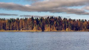 Preview wallpaper forest, trees, water, autumn, landscape