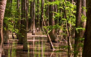 Preview wallpaper forest, trees, water, reflection, nature