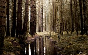 Preview wallpaper forest, water, spruce, trees