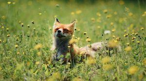 Preview wallpaper fox, cute, flowers, grass, animal