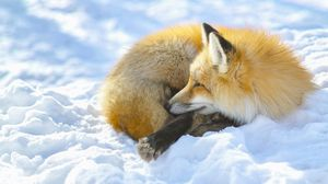 Preview wallpaper fox, snow, lying