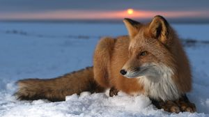 Preview wallpaper fox, snow, sky, hunting, care