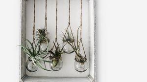 Preview wallpaper frame, jars, flowers, plants, decor