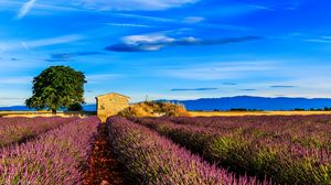Preview wallpaper france, provence, field, grass, sky