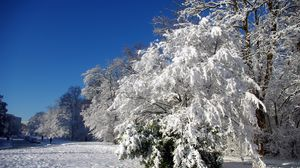 Preview wallpaper france, velizi-vilakubl, trees, hoarfrost, snow, winter, clearly