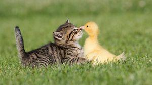 Preview wallpaper friendship, grass, kitten, duckling