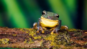 Preview wallpaper frog, bright color, branch, moss