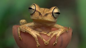 Preview wallpaper frog, eyes, color