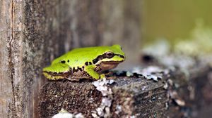Preview wallpaper frog, green, tree, sit