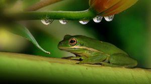 Preview wallpaper frog, plant, drops