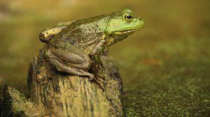Preview wallpaper frog, slime, color