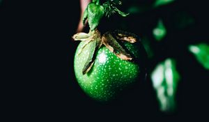 Preview wallpaper fruit, green, branch, leaves, plant
