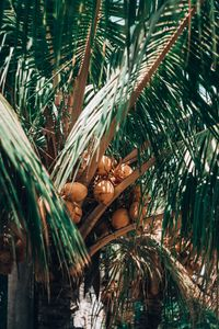 Preview wallpaper fruit, palm, plant, leaves
