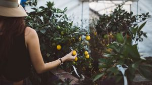 Preview wallpaper fruit, tree, hand, greenhouse