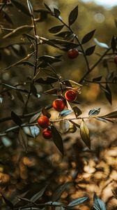 Preview wallpaper fruit, tree, plant, leaves