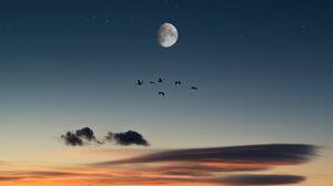 Preview wallpaper full moon, birds, desert, starry sky