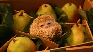 Preview wallpaper funny, box, hedgehog, pears