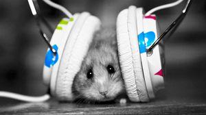 Preview wallpaper funny, music fan, music, little, hamster
