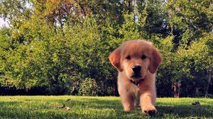 Preview wallpaper funny, summer, dog, puppy, grass