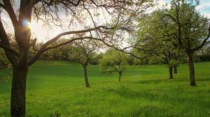 Preview wallpaper garden, field, trees, landscape