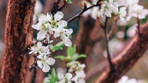 Preview wallpaper garden, flowers, bloom, trees