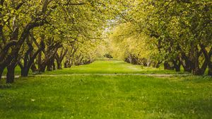 Preview wallpaper garden, trees, lawn, greenery, nature