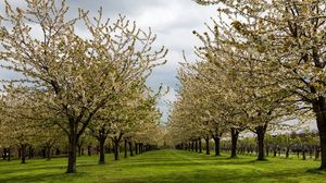 Preview wallpaper garden, trees, spring, flowering, plantation, grass, solarly, culture