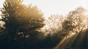 Preview wallpaper garden, trees, sunlight, dawn, morning