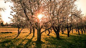 Preview wallpaper garden, trees, sunset, bloom, spring