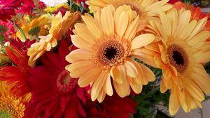 Preview wallpaper gerbera, flower, bouquet, bright, beautiful