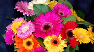 Preview wallpaper gerbera, flower, bouquet, bright, colorful