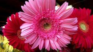 Preview wallpaper gerbera, flower, bouquet, lots, close-up