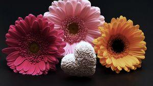 Preview wallpaper gerbera, flower, heart, valentines day