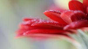 Preview wallpaper gerbera, flower, macro, petals, blur