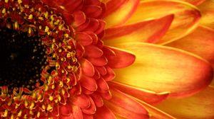 Preview wallpaper gerbera, flower, petals, closeup, peach