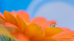 Preview wallpaper gerbera, flower, petals, drop, reflection, macro