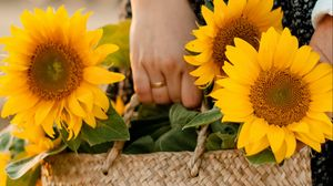 Preview wallpaper girl, bag, sunflowers, hands, flowers