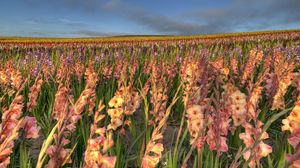 Preview wallpaper gladiolus, flowers, field, sky, horizon