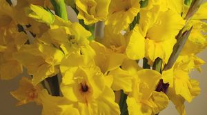 Preview wallpaper gladiolus, flowers, yellow, bouquet
