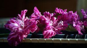 Preview wallpaper gladiolus, pink, piano, keys
