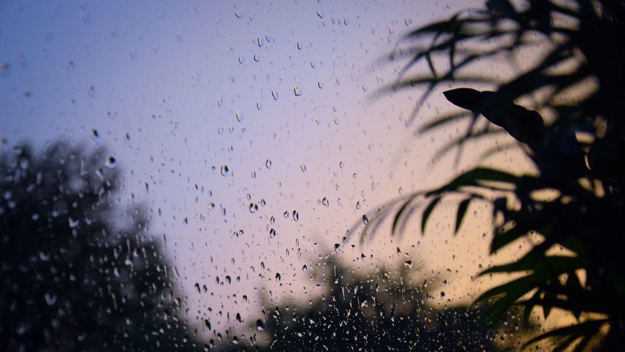 【壁纸桌面】墙纸,玻璃,水滴,湿的,树枝,树叶高清壁纸免费下载