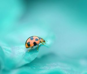 Preview wallpaper god, ladybug, leaf, crawling, insect