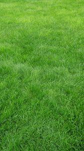 Preview wallpaper grain, grass, field, green