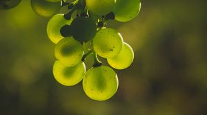 Preview wallpaper grapes, bunch, green, blur, glare