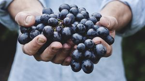 Preview wallpaper grapes, bunch, ripe, hands