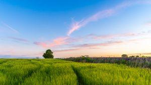 Preview wallpaper grass, field, tree, sky, summer